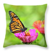 Monarch Butterfly Square Throw Pillow
