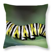 Monarch Caterpillar Macro Throw Pillow