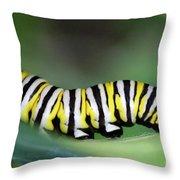 Monarch Caterpillar Macro Number 2 Throw Pillow