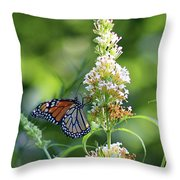 Monarch On White Butterfly Bush Throw Pillow