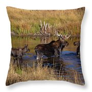 Moose At Green Pond Throw Pillow