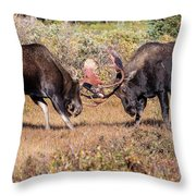 Moose Bulls Spar In The Colorado High Country Throw Pillow