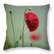 Morning Poppy Flower Throw Pillow