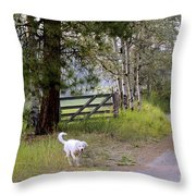 Morning Walk1 Throw Pillow