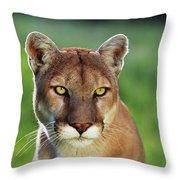 Mountain Lion Felis Concolor, Portrait Throw Pillow