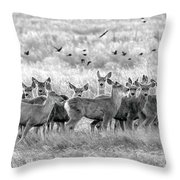 Mule Deer Black And White 01 Throw Pillow by Rob Graham