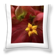 Mussaenda Philippica In Macro Poster Throw Pillow