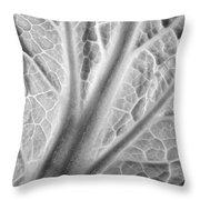 Napa Cabbage 2816 Throw Pillow
