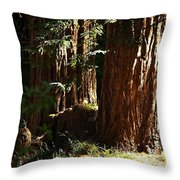 New Growth Redwoods Throw Pillow