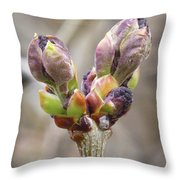 New Life In The Lilacs Throw Pillow