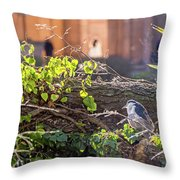 Night Heron At The Palace Throw Pillow by Kate Brown