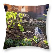 Night Heron At The Palace Revisited Throw Pillow by Kate Brown