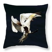 Northern Gannet - Square Crop Throw Pillow