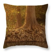 Old Cypress Tree Roots Throw Pillow