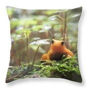 Orange Frog. Throw Pillow