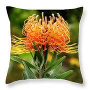 Orange Protea Throw Pillow