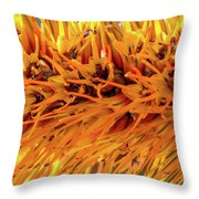 Orange Stamens Throw Pillow by Mark Shoolery