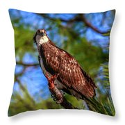 Osprey Lookin' At Ya Throw Pillow by Tom Claud