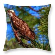Osprey On Limb Throw Pillow by Tom Claud