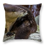 Otter Interrupted Throw Pillow by Kate Brown