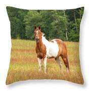 Paint Horse In Meadow Throw Pillow
