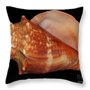 Painted Shell No. 9 Throw Pillow