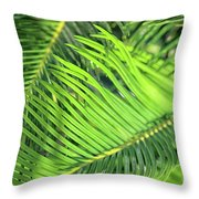 Palms In Light And Shadow Throw Pillow