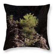 Palo Verde Spotlight-sq Throw Pillow