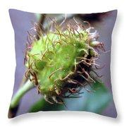 Photography Macro Shot Of A Beechnut Throw Pillow