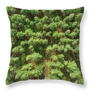 Pine Rows Aerial 2x1 Throw Pillow