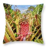 Pineapple Plant Ananas Pico Island Azores Portugal Throw Pillow