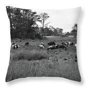 Pony Herd Bnw Throw Pillow