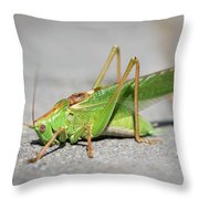 Portrait Of A Great Green Bush-cricket Sitting On The Pavement Throw Pillow