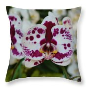 Portrait Of An Orchid Throw Pillow
