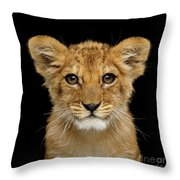 Portrait Of Little Lion Throw Pillow by Sergey Taran