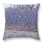 Prescott Arizona Watson Lake Bayou Trees Scrub Water Grasses 3142019 4916 Throw Pillow