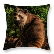 Procyon Lotor Throw Pillow by Jeff Phillippi