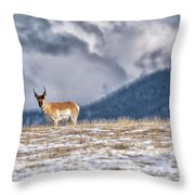 Pronghorn Throw Pillow by Bitter Buffalo Photography