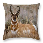 Pronghorn In The Sage Throw Pillow