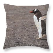 Quick Hurry - Gentoo Penguin By Alan M Hunt Throw Pillow by Alan M Hunt