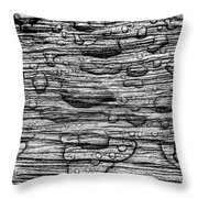 Raindrops On Wood, California, Usa Throw Pillow