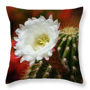 Red Bougainvillea Background For White Argentine Giant Flower Throw Pillow