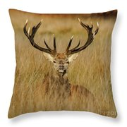 Red Deer Portrait 2 Throw Pillow