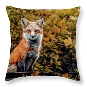 Red Fox In Fall Colors Throw Pillow
