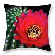 Red Hot Torch Cactus  Throw Pillow
