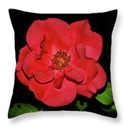 Red Rose With Dewdrops 038 Throw Pillow