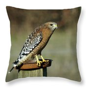 Red-shouldered Hawk Throw Pillow by Ben Upham III
