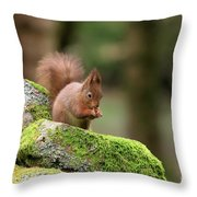 Red Squirrel Sciurus Vulgaris Eating A Seed On A Stone Wall Throw Pillow