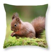 Red Squirrel Sciurus Vulgaris Throw Pillow