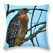 Red Shouldered Hawk Panorama Throw Pillow